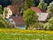 Sternenblumenblüte in Gaugenwald