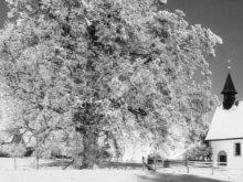 Gaugenwalder Kirche neben der großen Linde bei Schnee